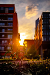 Vorhin im Tilla-Durieux-Park (DOKTOR WAUMIAU) Tags: berlin fuji fujifilm fujigear fujilove fujix fujixt20 lightroom xt20 potsdamerplatz xf35mmf2 xf35 tilladurieuxpark mitte sunset dawn bokeh backlit