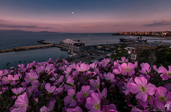 Spring is all around.. (vipantazi) Tags: spring colours pinkladies port rafina shipw canoneos7d tokina1116