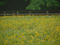 flowers (Thundercheese) Tags: rockcreekpark washington dc
