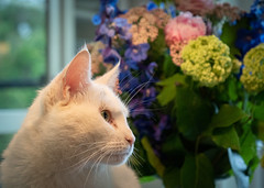Flowers and a cat (3) (bohelsted) Tags: home em5markii cat flowers 1260 varioelmarit leicadg