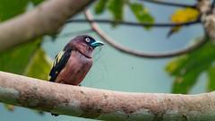 bird (sandilesmana28) Tags: sony a9 400 28 gm
