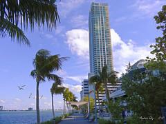 One Paraiso Residences. (Aglez the city guy ☺) Tags: bayview seashore blue building bayshore miamicity edgewater urbanexploration walking walkingaround waterways seascape sea seagull coconuttree outdoors