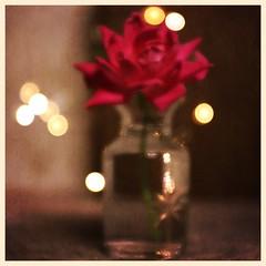 Still Life (DayBreak.Images) Tags: tabletop stilllife glass vase rose fairylights canondslr meyeroptic trioplan ringlight photoscape texture border home