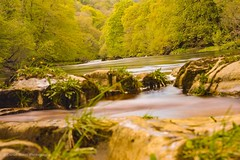 Hudswell forests richmond (danielbooth3) Tags: richmond river riverswale woods nationaltrust walking walks northyorkshire visityorkshire yorkshire