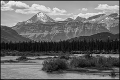 The Flow (greenschist) Tags: trees forest alberta mountains blackwhite canada athabascariver jaspernationalpark water snow