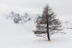 Ode To Winter (Nicolas Gailland) Tags: landscape nature paysage montagne mountain hiver winter neige snow white blanc lautaret coldulautaret meije grave oisans écrins ecrins alpes alps alpe france canon hitech filter gnd mark