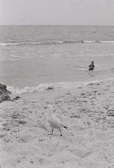 Beach 5 (adam_h_photo) Tags: halfframe olympuspenft monochrome film filmphotography 35mm analogue analog photofilmy ishootfilm istillshootfilm blackandwhite beach