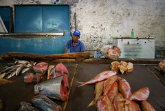 Mauritius Port Louis VI (stega60) Tags: mauritius portlouis market fish fishmarket salesstand fisher red blue stega60