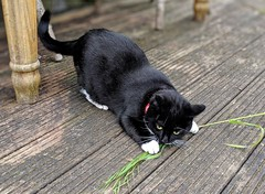 Kitty cat busy with play (dksesha) Tags: seshadri dhanakoti harita samvatsara googlepixel3xl googlepixel pixel3 pixel3xl sesh seshfamily haritasya vikaari vikaarisamvatsara google pixel tilottama