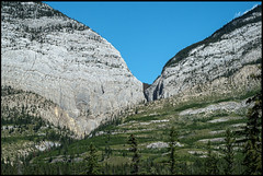 V (greenschist) Tags: alberta mountains canada trees jaspernationalpark forest