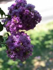 Purple (NIKONIANO) Tags:
