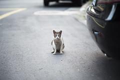 Looking sad (jasoncremephotography) Tags: leica sl leicasl summilux 75mm feline cat