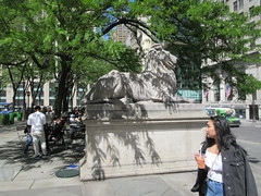 2019 Lion Under Shady Branches New York Public Library 8746 (Brechtbug) Tags: 2019 lions new york public library statues lion hanging shadows 42nd street 5th avenue nyc 05182019 may springtime soon spring weather eventually animal cat feline statue sculpture art cats ave st gargoyles gargoyle reclining repose resting facade stairs front entrance