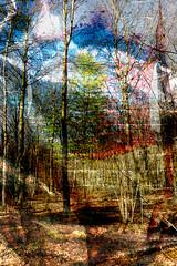 07-101 (roberke) Tags: photomontage photoshop layers lagen textures textuur bos bomen trees surreal fantasy creation creative creatief kleurrijk kleuren wood