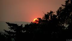 hidden sun (LTL78) Tags: samsungnx30 sun ocaso arbol tree sunset sol