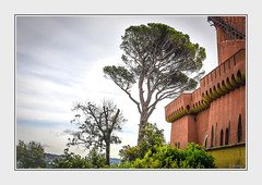 - DSC_6034 c. (Ferruccio Jochler) Tags: natura bosco pineta castello