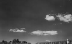 Gefiltert (alf sigaro) Tags: vredeboxsyncrona vredeborch vredebox syncrona box 6x9 sw bw himmel wolken gelbfilter weinberge weinberg vineyard vineyards