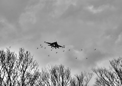 Mind the birds! (Rod Martins) Tags: 11thapril2019 birds f16c fightingfalcon frisianflag leeuwarden netherlands usaf viper monochrome