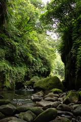 _DSC0012 (Y.S. Lien) Tags: waterplaying rivertracing valley nature thewormhole shiding newtaipei taiwan 戲水 溯溪 溪谷 自然 蚯蚓坑 石碇 新北 台灣