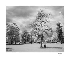 Buddies (agianelo) Tags: liberty park trees infrared ir trash can monochrome bw bn blackandwhite