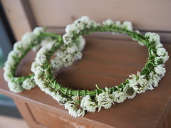 """White Crown"" (murozo) Tags: white clover flower green wreath akita japan spring シロツメクサ 花 緑 白 冠 秋田 日本 春"