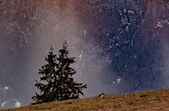 Once upon a time (Bruno Malfondet) Tags: clairobscur faverges arbre montagne sliderssunday sapin