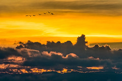 Flock Above the Clouds (David Hamments) Tags: birds sunset clouds cooeebeach flickrunitedaward fantasticnature