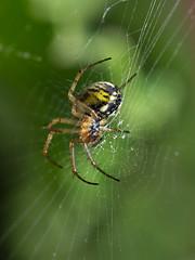 Just a Spider (max832) Tags: natura macro olympus colorfull em10iii omd colorato colors fiori animali insetti micro43 60mm28macro 2019 mft primavera spring nature