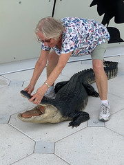 PGOLDMAN_CocoaBeach-6.jpg (Phil Goldman) Tags: pgoldman explorationtower animal alligator location person may month unitedstates 2019 florida cocaobeach capecanaveral unitedstatesofamerica