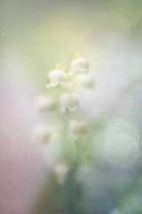 Lily of the Valley (judy dean) Tags: judydean 2019 garden lensbaby texture ps lilyofthevalley