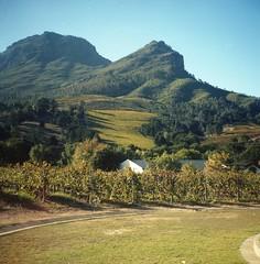 Zorgvliet Estate (Myahcat) Tags: 120 film mediumformat diana dianaf lomography lomo autumn southafrica westerncape analogue wine vineyard zorgvliet stellenbosch