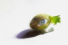 Fish Eye (roefhopman) Tags: eye green fisheye poppy hairy photoshop