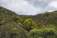 Tras el arroyo (lebeauserge.es) Tags: pinilladelvalle madrid sierra naturaleza montaña cielo nubes