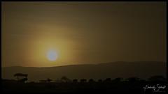 Wildebeest sunrise (SpacePaparazzi.com) Tags: tanzania africa southeastafrica safari seringetti ngorongorocrater sunrise wildebeest silhouette