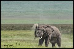 Elephant dust shower (SpacePaparazzi.com) Tags: tanzania africa southeastafrica safari ngorongorocrater elephant dust big5