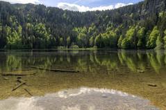 Das glasklare Wasser des Feldsees