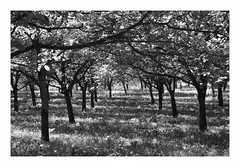 A l'ombre des arbres (Tostaky2) Tags: arbre tree nature campagne lumiere light noiretblanc blackdiamond blackandwhite france isere