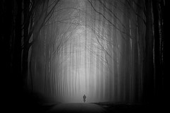 Immersi (Zz manipulation) Tags: art ambrosioni zzmanipulation nebbia luce solitario ciclista people solitudine alberi natura