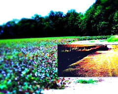 """Poem ... """"Sandy Roads"""" (acastleblue) Tags: camphone poetry poem sandyroads greglovesadelaide"""