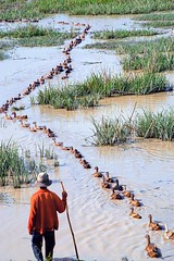 CAMBODIA347/ follow the leader!