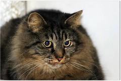 Auguri  a tutti i gatti del mondo ! (Simply Viola ( Busy +off-on )) Tags: animali cats gatti felini pet