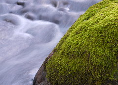 Eagle Creek (DJ Fotographic) Tags: lumix nikkor panasonic 3770 af f3345 nature motion water moss creek g10 slik