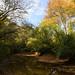 Lullwater Preserve