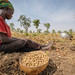 Livelihood in Northern Ghana