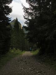 Little guy – big word (aniko e) Tags: schwarzenbachtal schwarzenbach klamm leonhardstein path hiking outdoors forest autumn germany