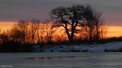 Fortsetzung... (continuation...) (skruemel86) Tags: sonnenaufgang sunrise teich gefroren bäume panasonic lumix fz82 ngc frozen tree trees pond