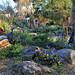 Rock Garden Blooms