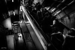 En bonne voie... / On the right track... (vedebe) Tags: gares gare station escaliers escalator humain human people foule lumière marches ville city rue street urbain urban quai noiretblanc netb nb bw monochrome personnes train architecture