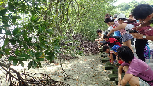 Chek Jawa Boardwalk tour with the Naked Hermit Crabs, Apr 2019