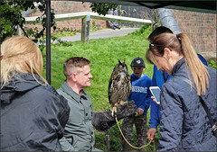 Bird of prey, Alvechurch (alanhitchcock49) Tags: hawks birds of prey 13 april 2019 crown inn withybed green alvechurch worcester birmingham and droitwich canals society 50th anniversary celebration canal